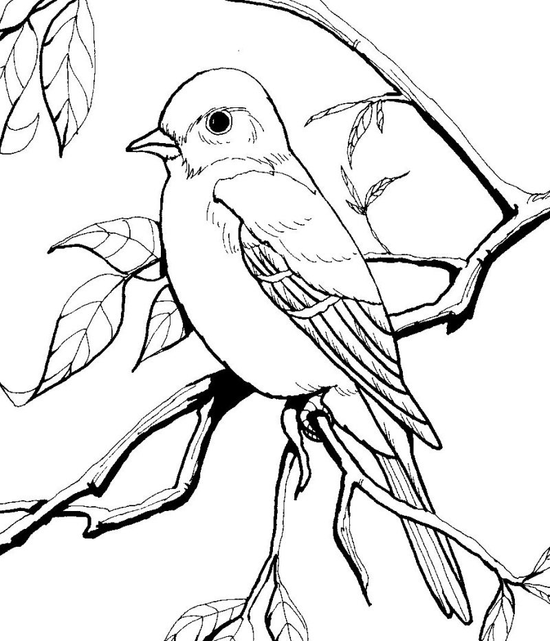 Freebie Burgess Bird And Animal Book Images Http Coloring Pages