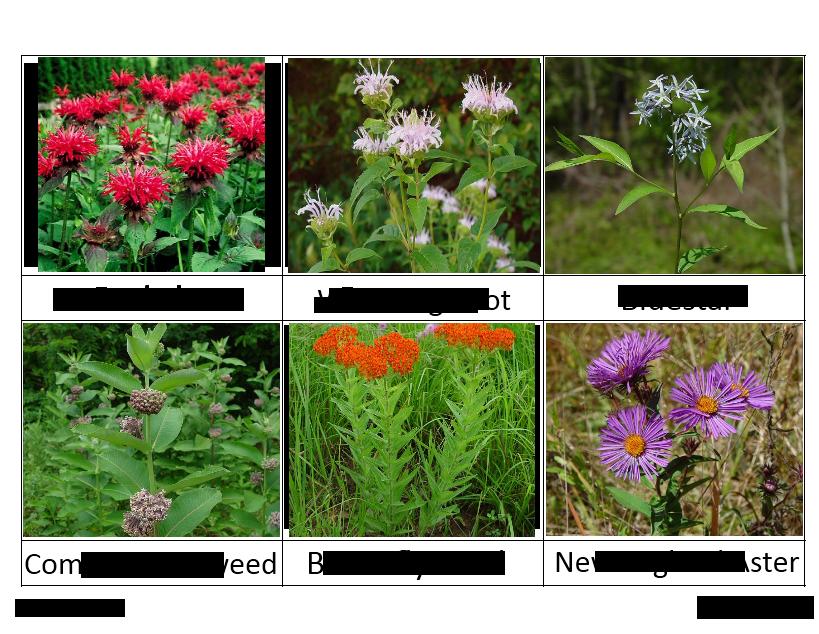 WTN Meadow Flowers 1 - Montessori
