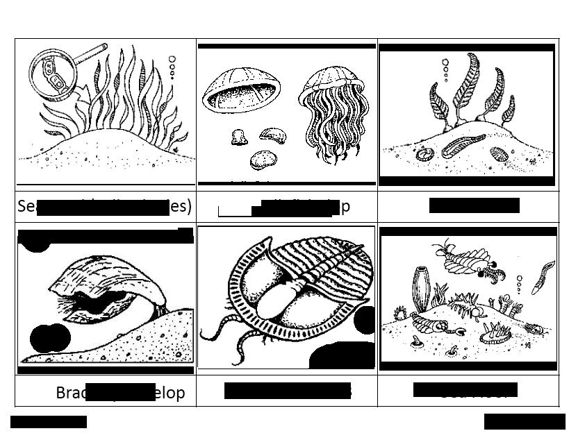 2precambrian cambrian - Montessori