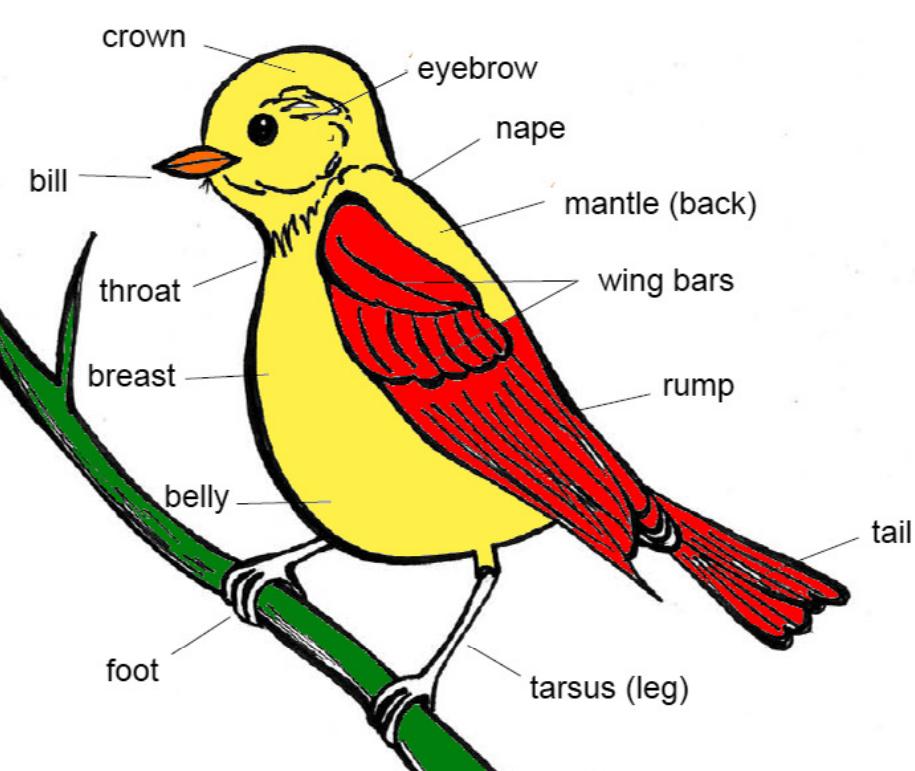 bird - Montessori